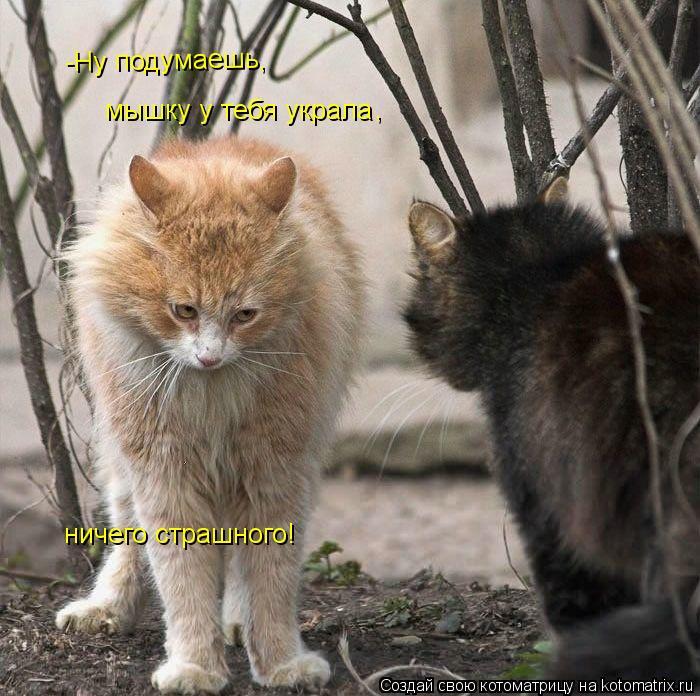Котоматрица: -Ну подумаешь, мышку у тебя украла , ничего страшного!
