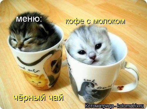 Котоматрица: меню: чёрный чай кофе с молоком