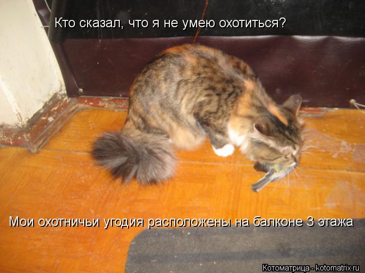 Котоматрица: Кто сказал, что я не умею охотиться? Мои охотничьи угодия расположены на балконе 3 этажа