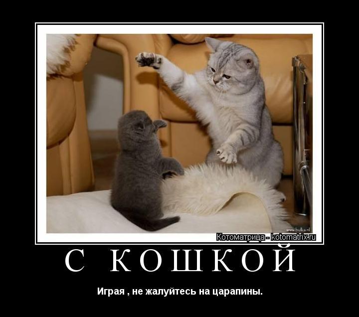 Котоматрица: С кошкой Играя , не жалуйтесь на царапины.