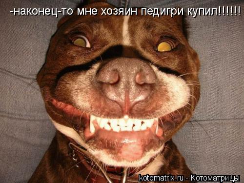 Котоматрица: -наконец-то мне хозяин педигри купил!!!!!!