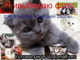 Котоматрица: Я ивыбираю фото для альбома кошачьей школы