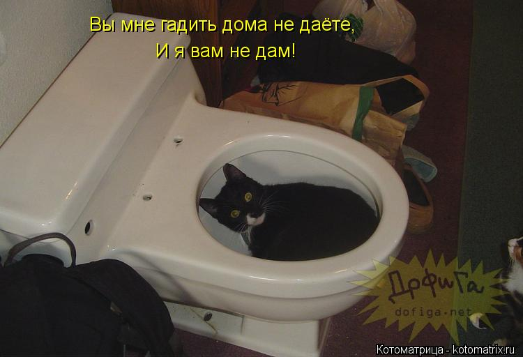 Котоматрица: Вы мне гадить дома не даёте, И я вам не дам!