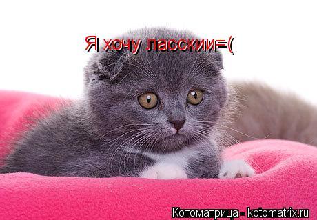 Котоматрица: Я хочу ласскии=( Я хочу ласскии=(