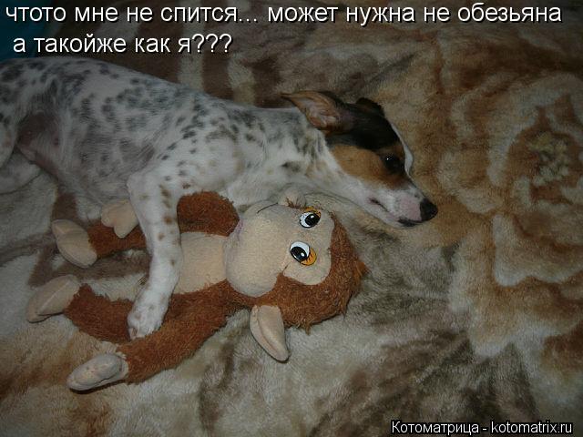Котоматрица: чтото мне не спится... может нужна не обезьяна а такойже как я???