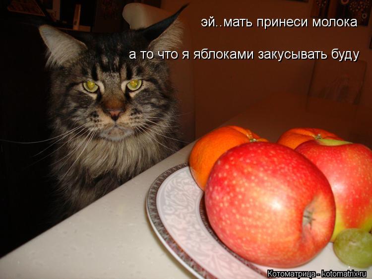 Котоматрица: эй..мать принеси молока а то что я яблоками закусывать буду
