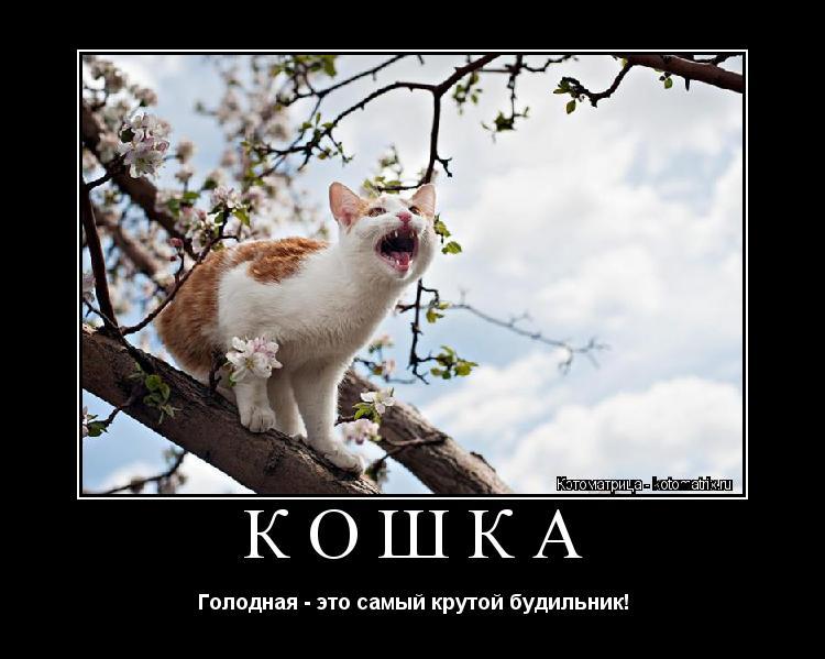 Котоматрица: Кошка Голодная - это самый крутой будильник!