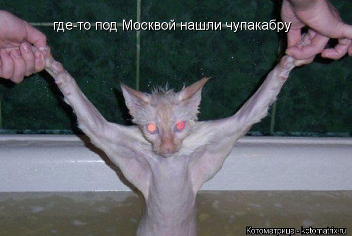 Котоматрица: где-то под Москвой нашли чупакабру