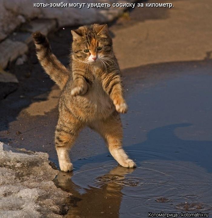 Котоматрица: коты-зомби могут увидеть сосиску за километр.