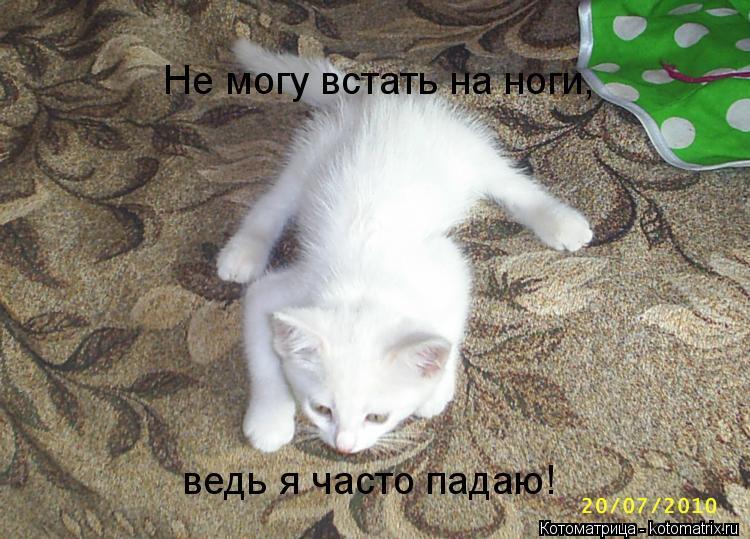 Котоматрица: Не могу встать на ноги, ведь я часто падаю!