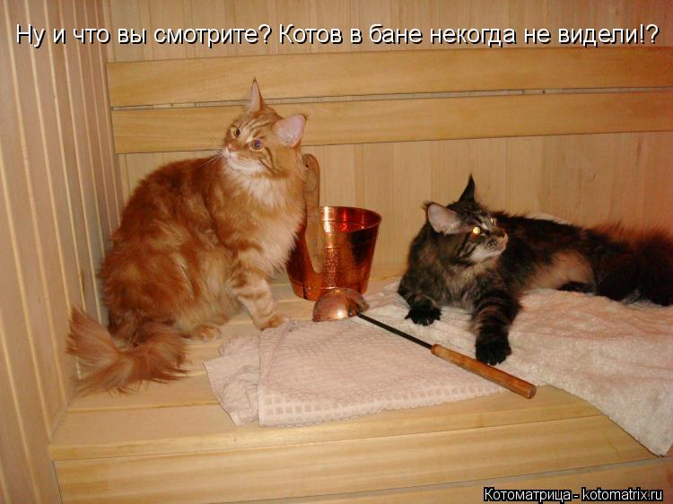 Котоматрица: Ну и что вы смотрите? Котов в бане некогда не видели!?