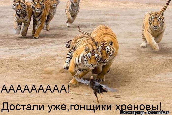 Котоматрица: ААААААААА!  Достали уже,гонщики хреновы!