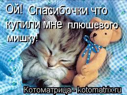 Котоматрица: Ой! Спасибочки что купили мне плюшевого мишку!