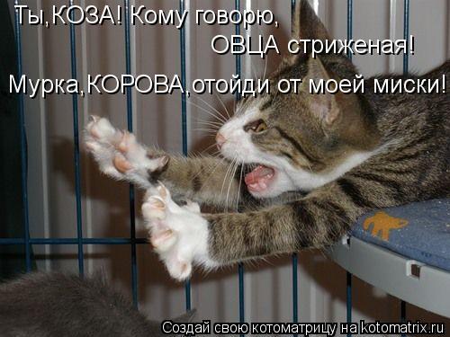 Котоматрица: ОВЦА стриженая! Ты,КОЗА! Кому говорю, Мурка,КОРОВА,отойди от моей миски!