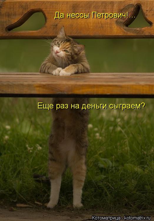 Котоматрица: Да нессы Петрович! Еще раз на деньги сыграем? ...