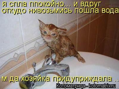 Котоматрица: я спла ппокойно... и вдруг откудо нивозьмись пошла вода м да хозяйка придуприждала ...