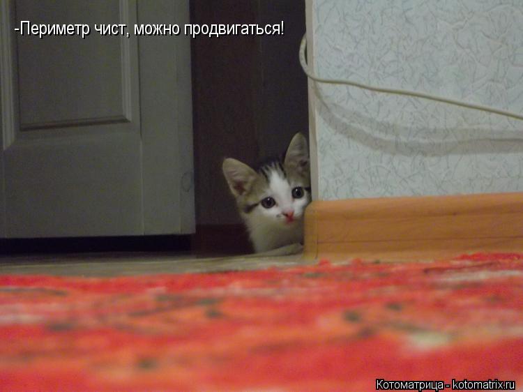 Котоматрица: -Периметр чист, можно продвигаться!