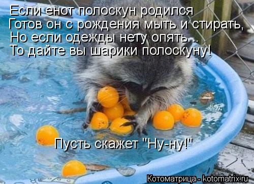 """Котоматрица: Если енот полоскун родился  Готов он с рождения мыть и стирать, Но если одежды нету опять... То дайте вы шарики полоскуну! Пусть скажет """"Ну-ну!"""""""