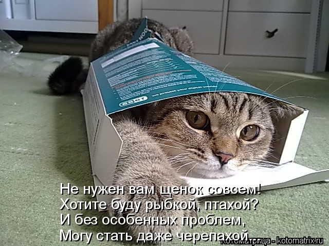 Котоматрица: Не нужен вам щенок совсем! Хотите буду рыбкой, птахой? И без особенных проблем, Могу стать даже черепахой...
