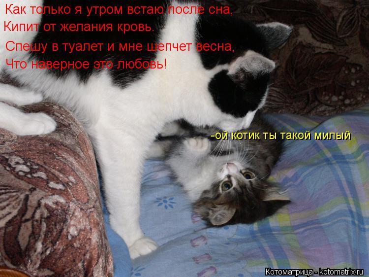 Котоматрица: Как только я утром встаю после сна, Кипит от желания кровь. Спешу в туалет и мне шепчет весна, Что наверное это любовь! -ой котик ты такой милы