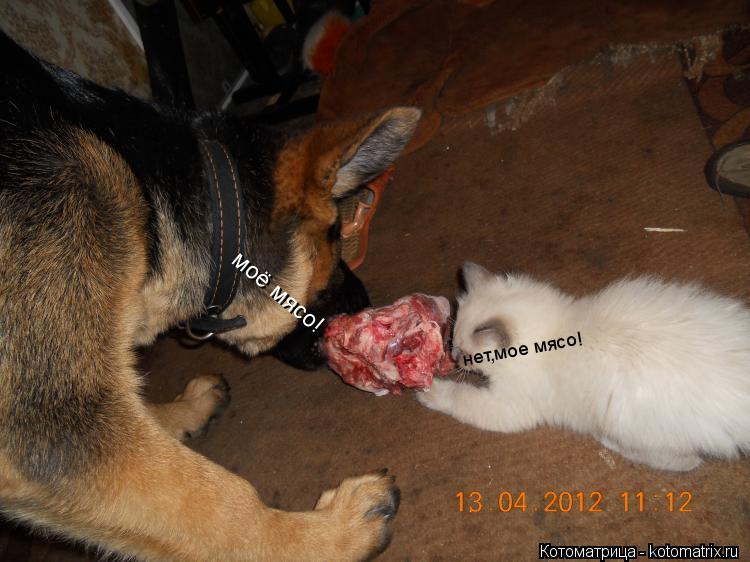 Котоматрица: моё мясо! нет,мое мясо!