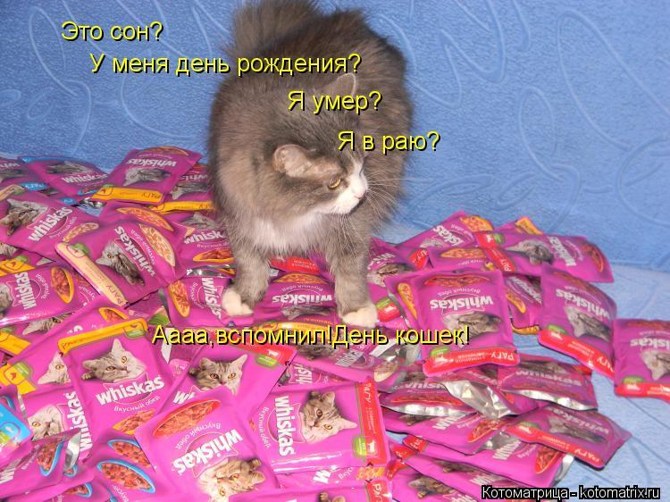 Котоматрица: Это сон? У меня день рождения? Я умер? Я в раю? Аааа,вспомнил!День кошек!