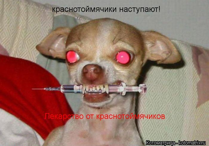 Котоматрица: Лекарство от краснотоймячиков  краснотоймячики наступают!