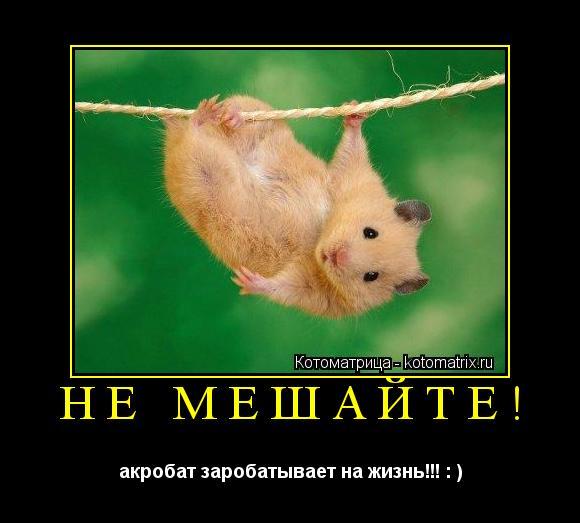 Котоматрица: не мешайте! акробат заробатывает на жизнь!!! : )