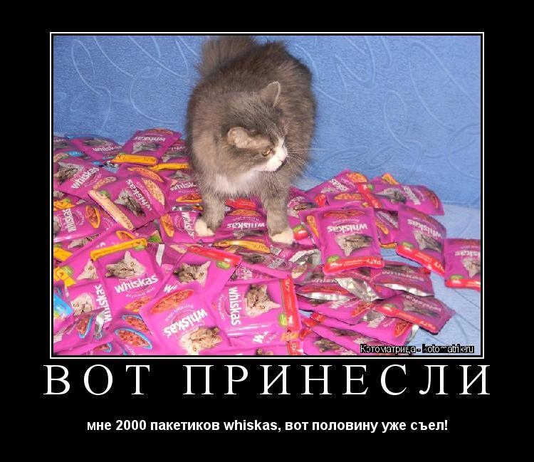 Котоматрица: вот принесли мне 2000 пакетиков whiskas, вот половину уже съел!
