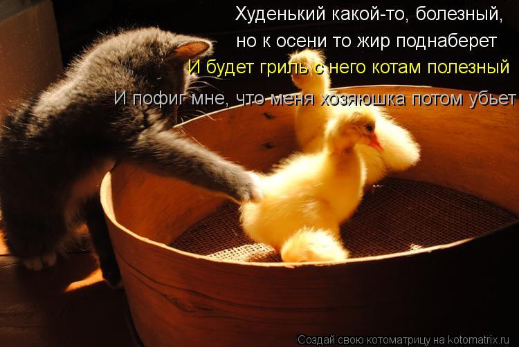 Котоматрица: Худенький какой-то, болезный,  но к осени то жир поднаберет И будет гриль с него котам полезный И пофиг мне, что меня хозяюшка потом убьет