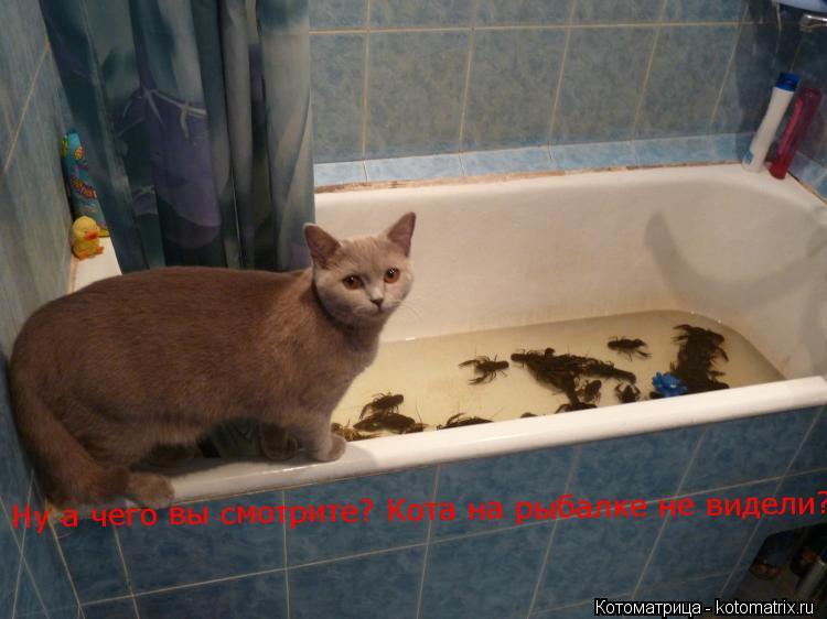 Котоматрица: Ну а чего вы смотрите? Кота на рыбалке не видели?