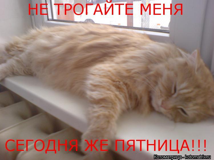 Котоматрица: НЕ ТРОГАЙТЕ МЕНЯ СЕГОДНЯ ЖЕ ПЯТНИЦА!!!