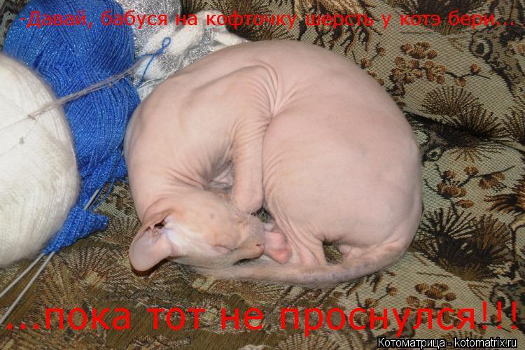 Котоматрица: -Давай, бабуся на кофточку шерсть у котэ бери... ...пока тот не проснулся!!!
