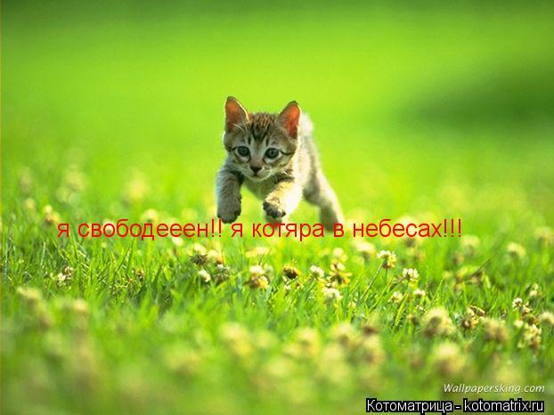 Котоматрица: я свободееен!! я котяра в небесах!!!