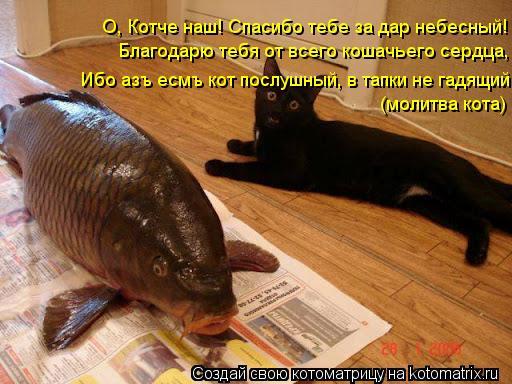 Котоматрица: О, Котче наш! Спасибо тебе за дар небесный! Благодарю тебя от всего кошачьего сердца, Ибо азъ есмъ кот послушный, в тапки не гадящий (молитва