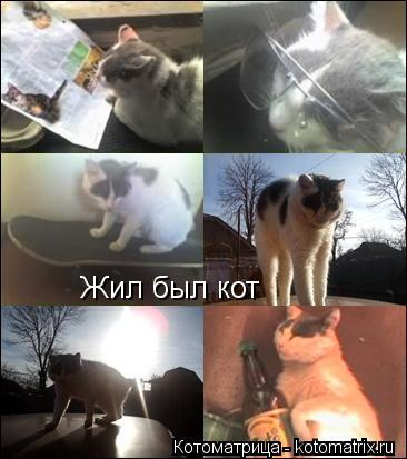 Котоматрица: Жил был кот