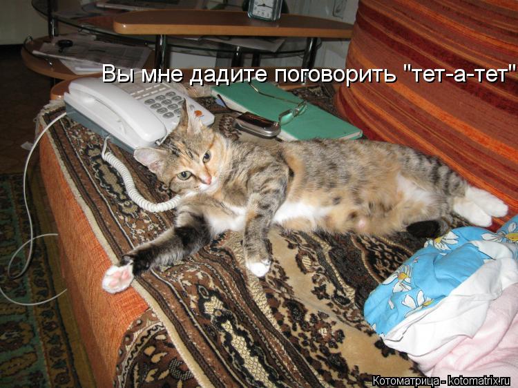 """Котоматрица: Вы мне дадите поговорить """"тет-а-тет""""!"""