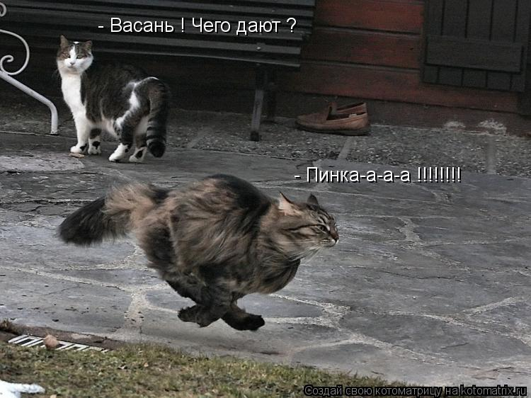 Котоматрица: - Васань ! Чего дают ? - Пинка-а-а-а !!!!!!!!
