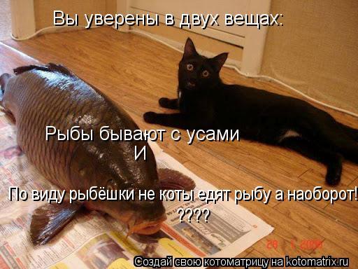 Котоматрица: Вы уверены в двух вещах: Рыбы бывают с усами И По виду рыбёшки не коты едят рыбу а наоборот! ????
