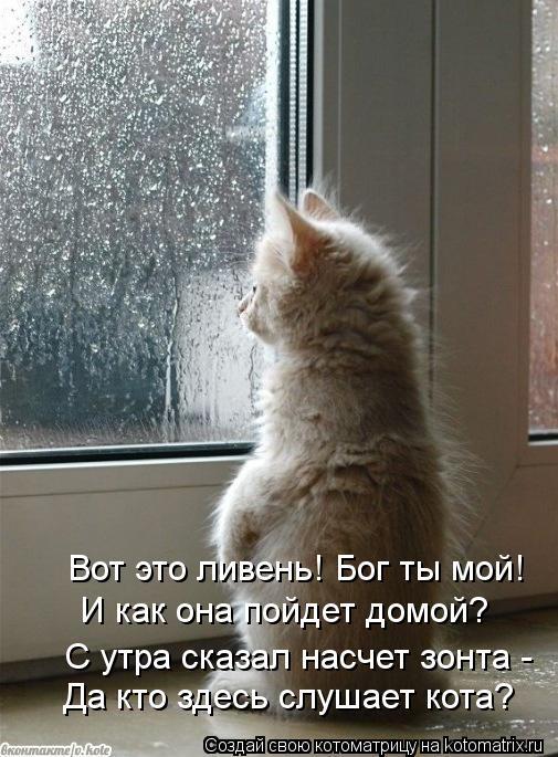Котоматрица: Да кто здесь слушает кота? И как она пойдет домой? С утра сказал насчет зонта -  Вот это ливень! Бог ты мой!