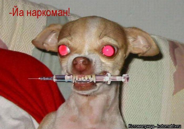 Котоматрица: -Йа наркоман!
