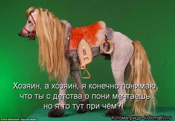 Котоматрица: Хозяин, а хозяин, я конечно понимаю что ты с детства о пони мечтаешь , , но я то тут при чём?!