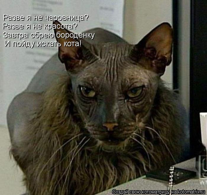 Котоматрица: Разве я не чаровница? Разве я не красота? Завтра сбрею бородёнку   И пойду искать кота!