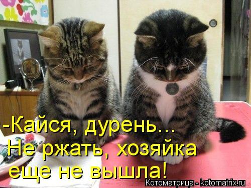 Котоматрица: -Кайся, дурень... Не ржать, хозяйка  еще не вышла!
