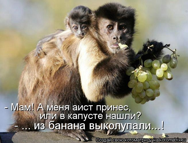 Котоматрица: - Мам! А меня аист принес,   - ... из банана выколупали...! или в капусте нашли?