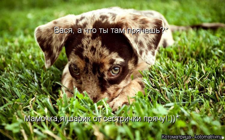 Котоматрица: Вася, а что ты там прячешь?* Мамочка,я шарик от сестрички прячу!:))*