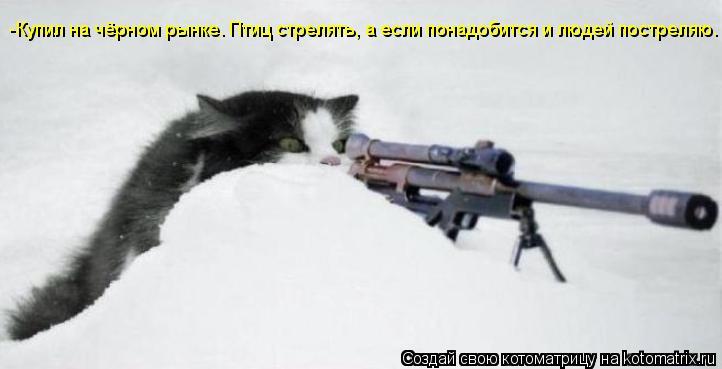 Котоматрица: -Купил на чёрном рынке. Птиц стрелять, а если понадобится и людей постреляю.