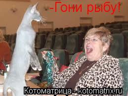 Котоматрица: -Гони рыбу!