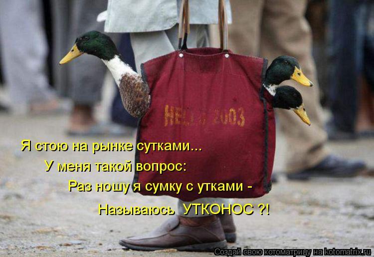 Котоматрица: Я стою на рынке сутками... У меня такой вопрос: Раз ношу я сумку с утками - Называюсь  УТКОНОС ?!