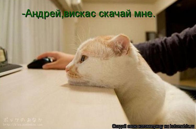 Котоматрица: -Андрей,вискас скачай мне.